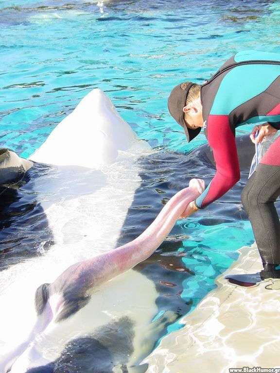 polovie-organi-delfinov-foto
